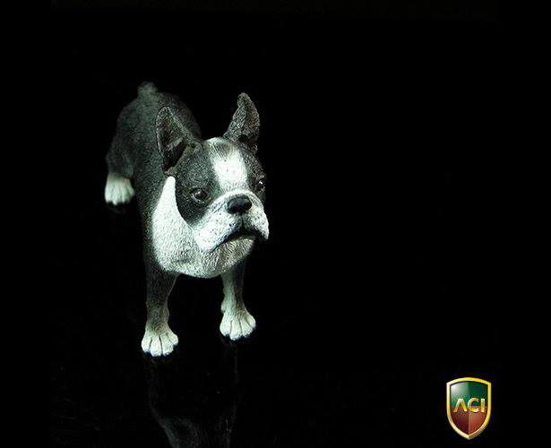 aci-dog1