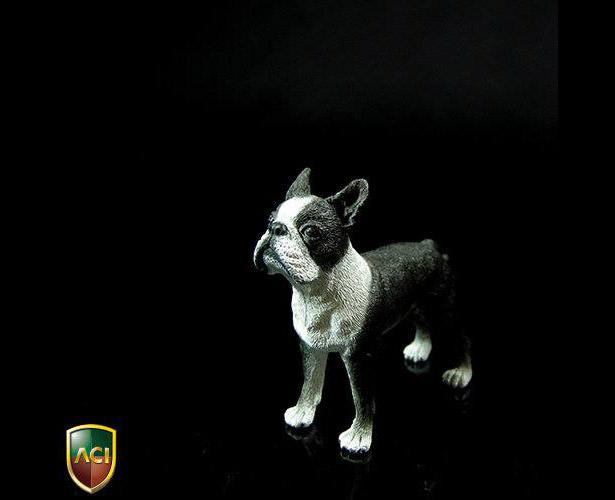 aci-dog3