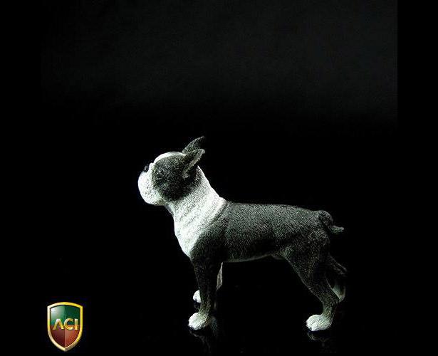 aci-dog4