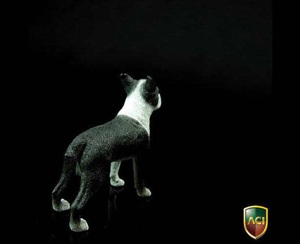 aci-dog5
