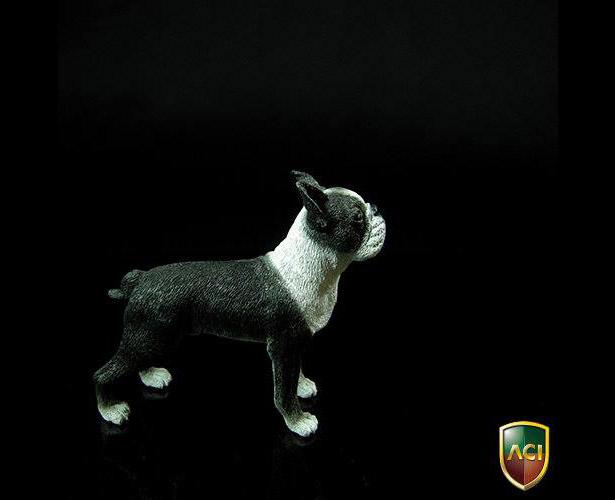 aci-dog6