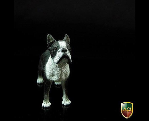 aci-dog7