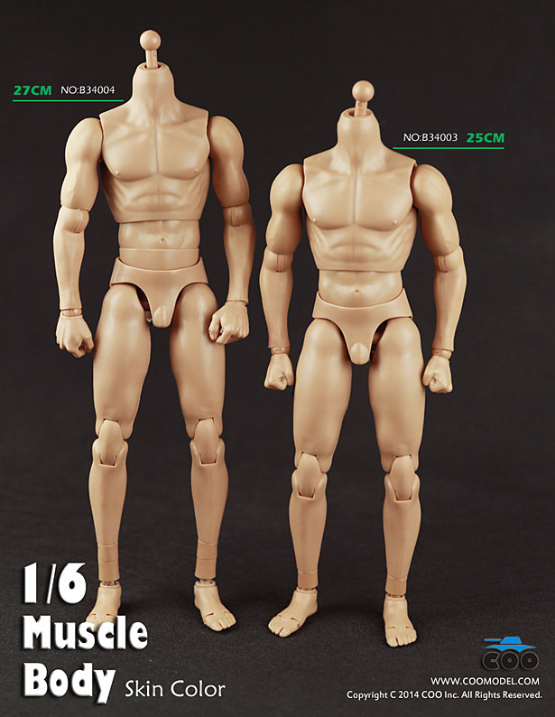 coo-body-muscle1