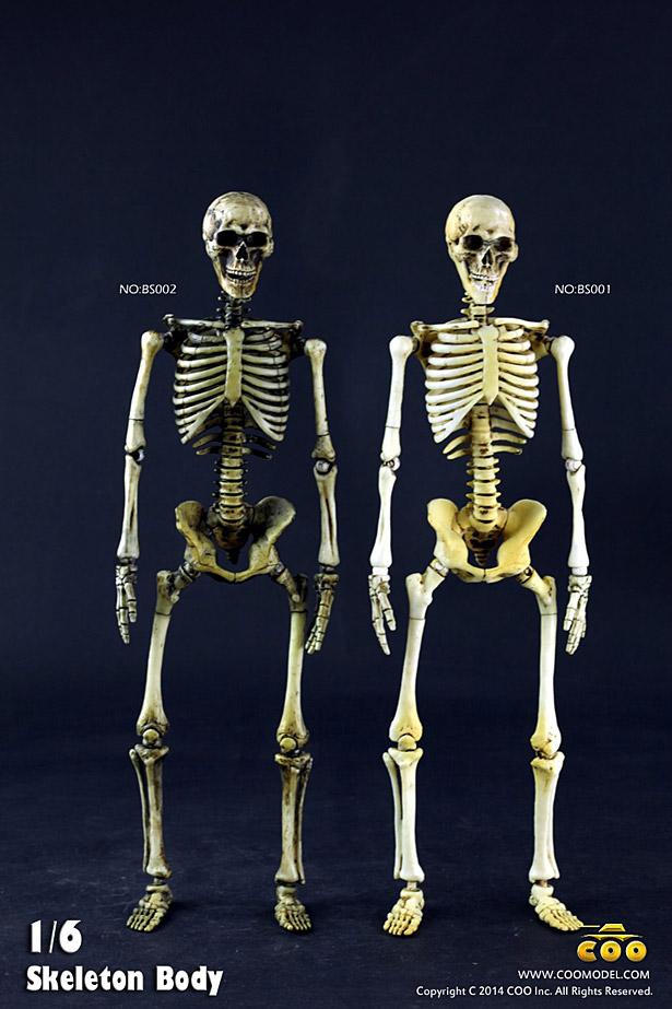 coo-skeleton01