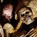 coo-skeletttitel