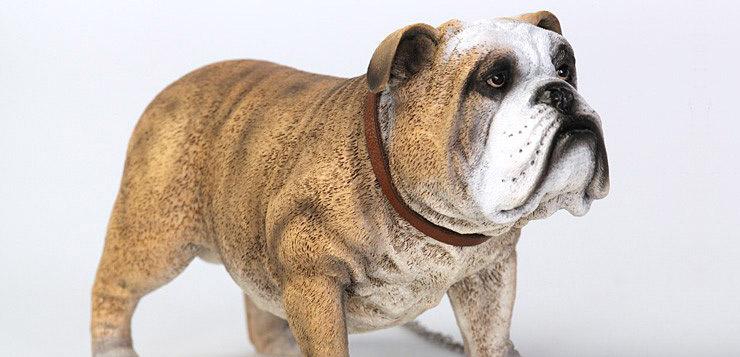 did-bulldog00