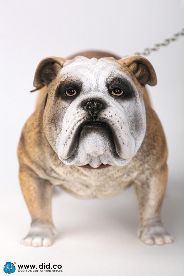 did-bulldog02