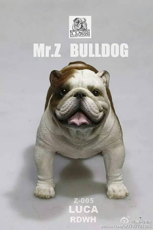mrZ-bulldog02