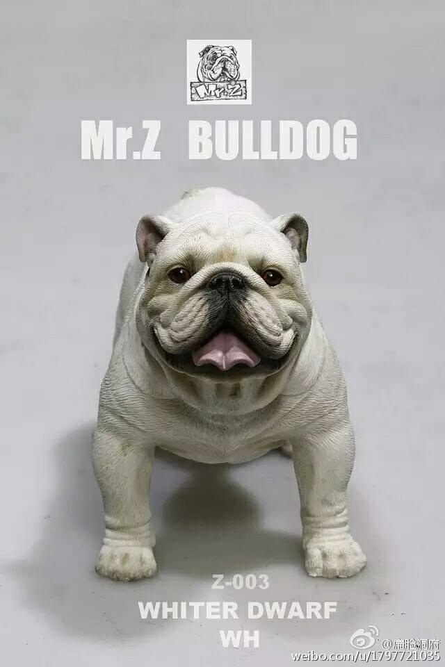 mrZ-bulldog04