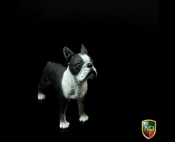 aci-dog2