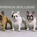 mrZ-frenchBulldog00