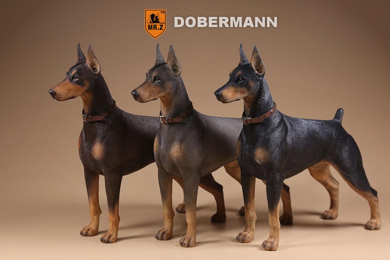 Mr Z Dobermann Dogs