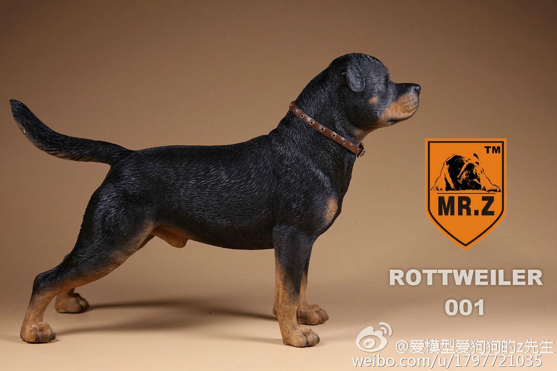 Mr Z Rottweiler Dogs