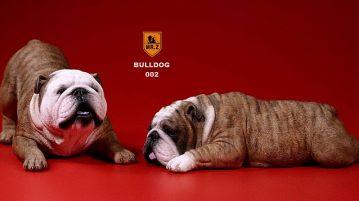 mrz-bulldog00