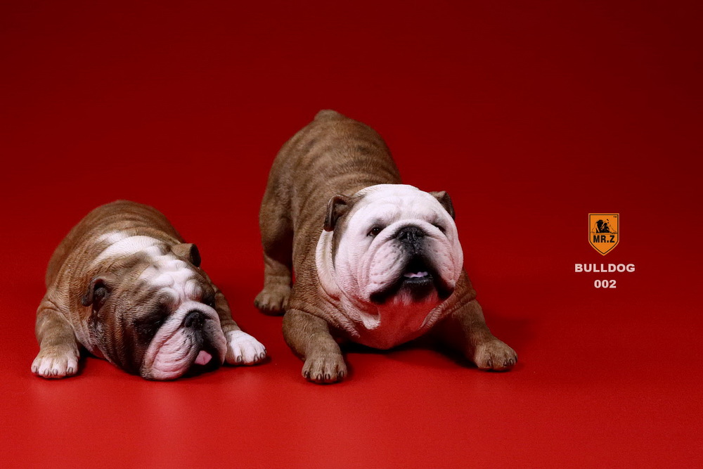 mrz-bulldog07