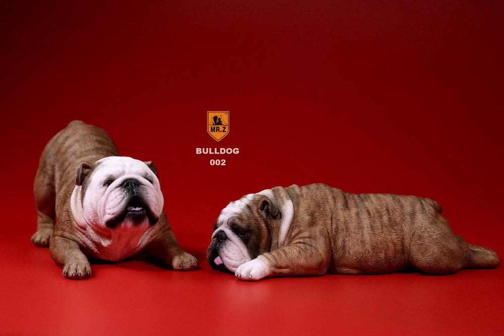mrz-bulldog08