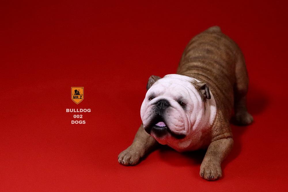 mrz-bulldog09