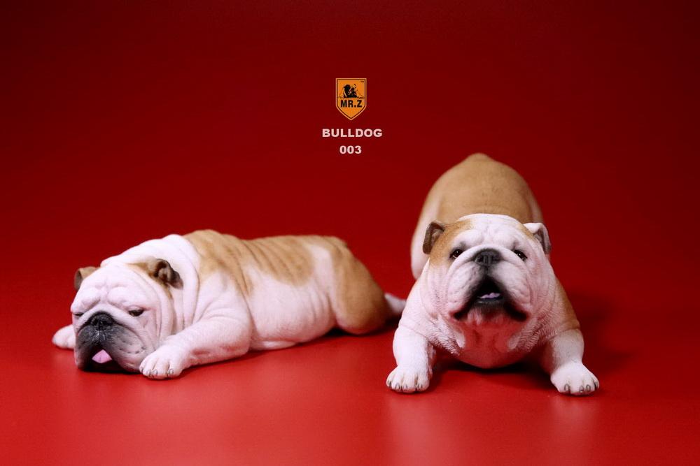 mrz-bulldog12