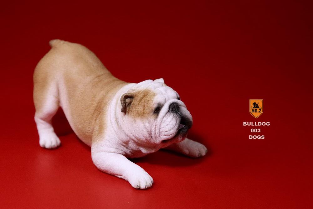 mrz-bulldog14