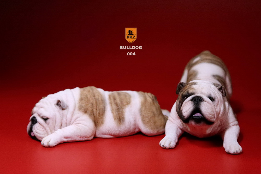 mrz-bulldog18