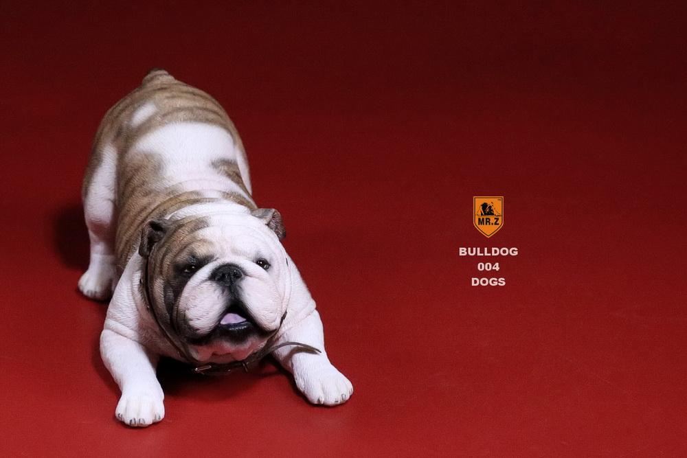mrz-bulldog19