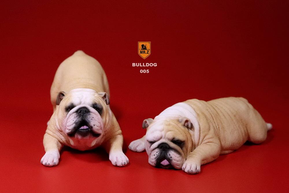 mrz-bulldog23