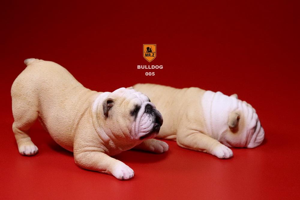 mrz-bulldog24