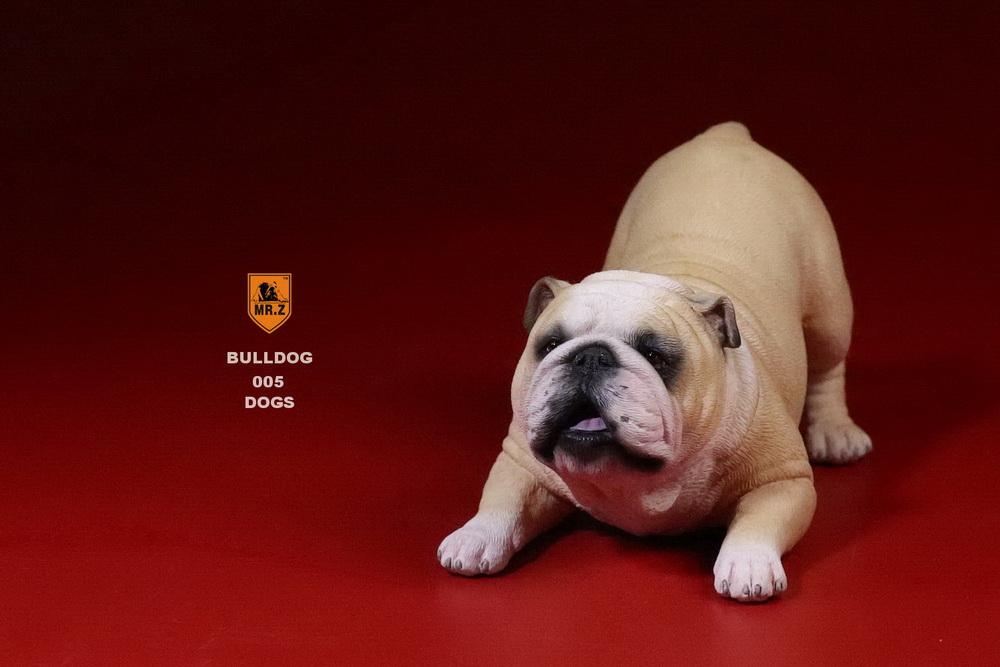 mrz-bulldog25