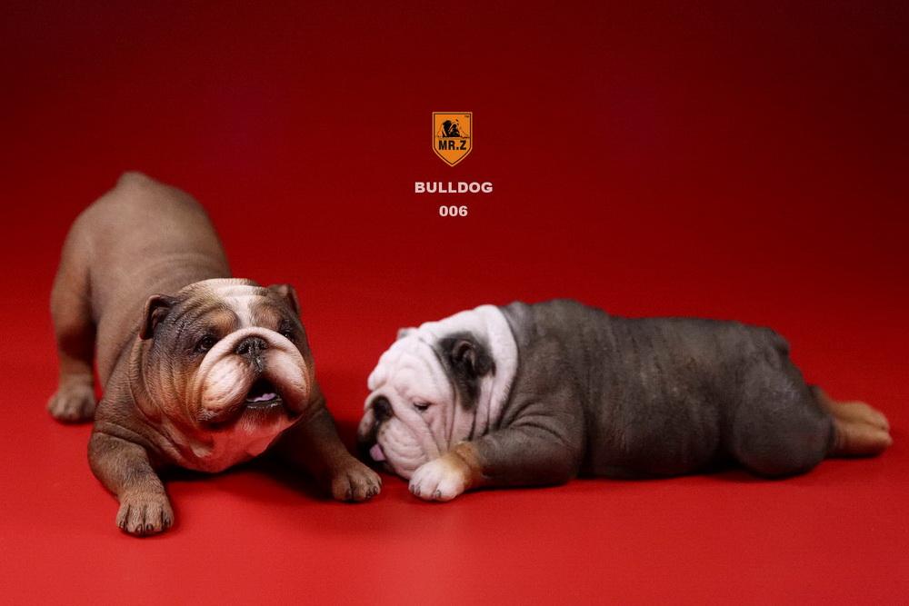 mrz-bulldog29