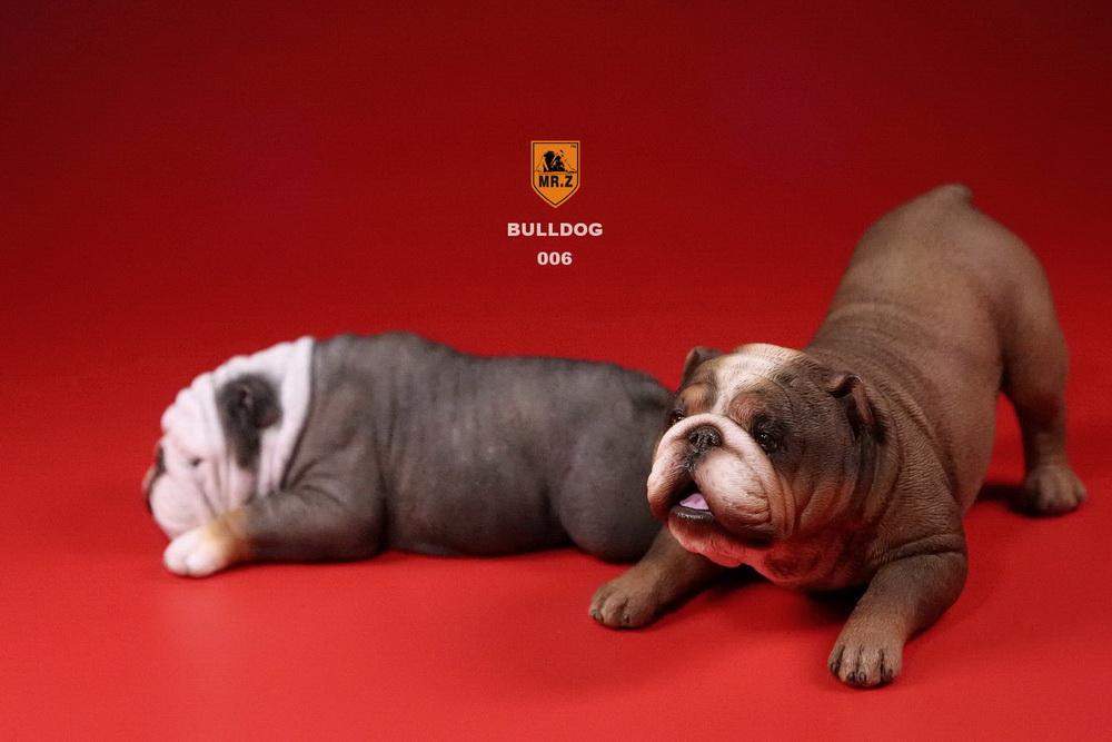 mrz-bulldog31
