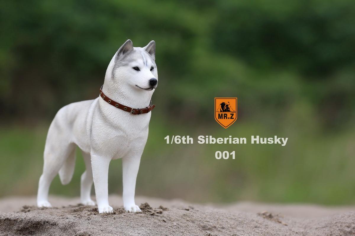 mrz-husky004
