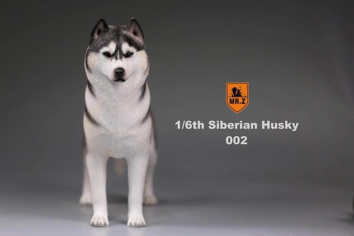 mrz-husky005