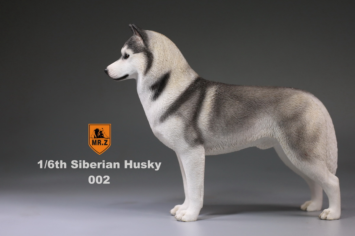 mrz-husky007