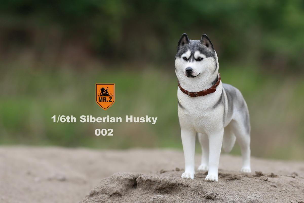 mrz-husky008