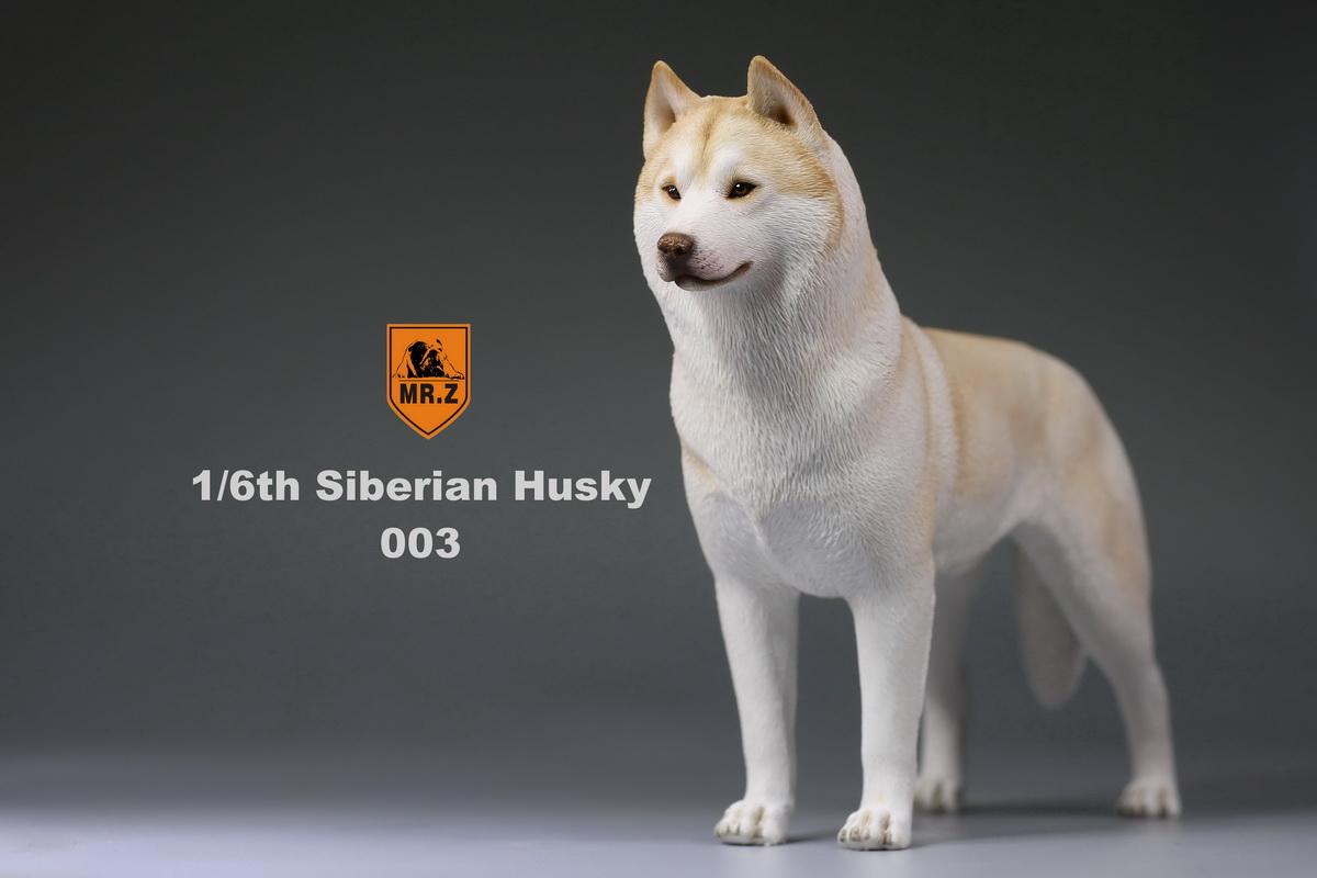mrz-husky010