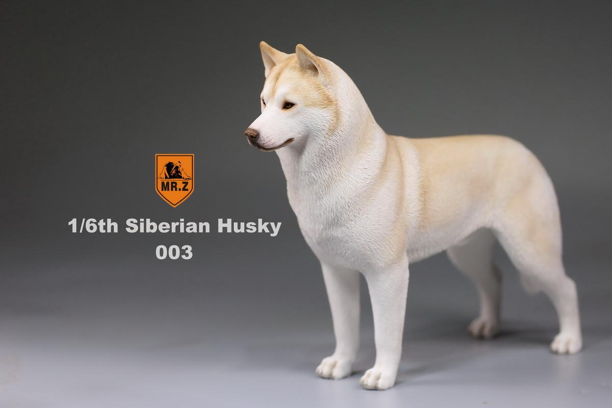 mrz-husky011