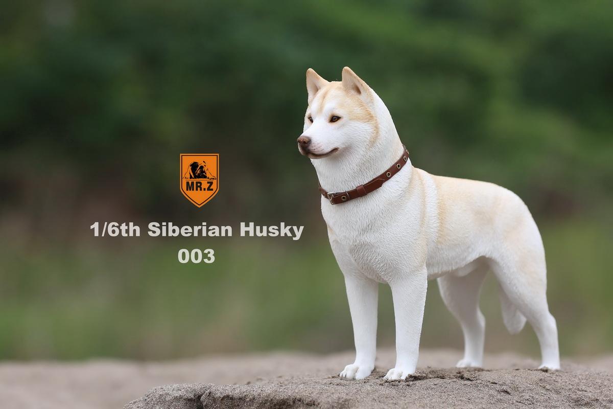 mrz-husky013