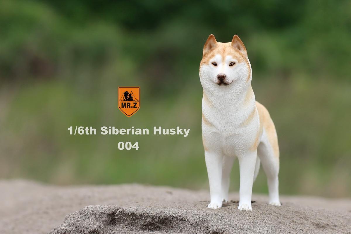 mrz-husky017