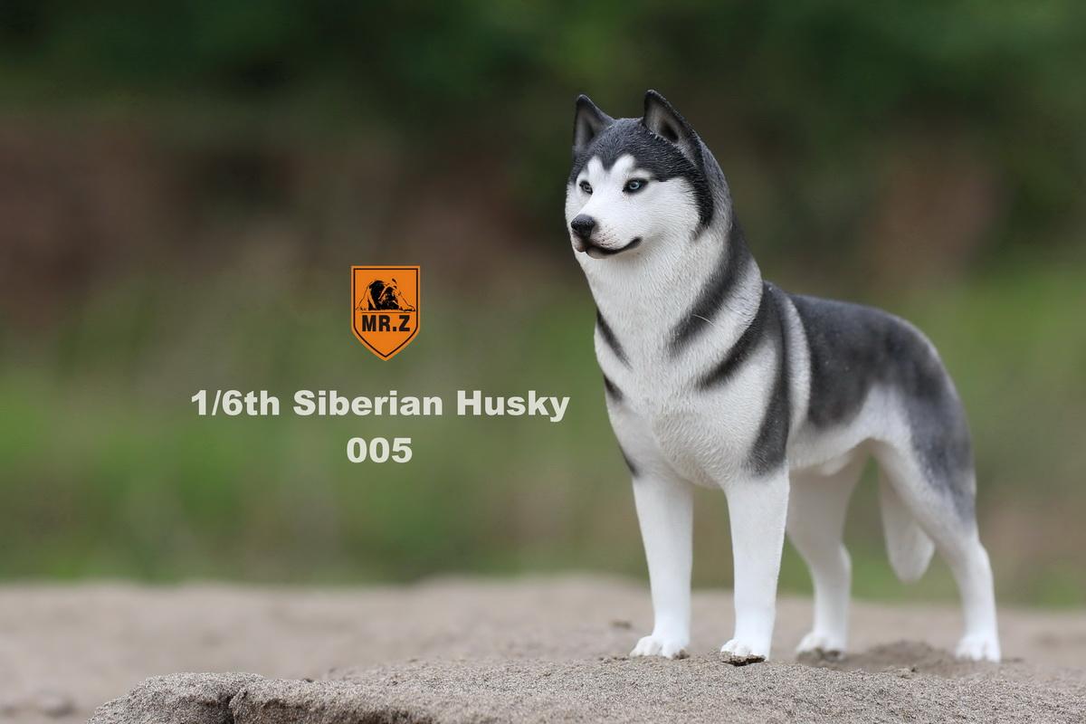 mrz-husky021