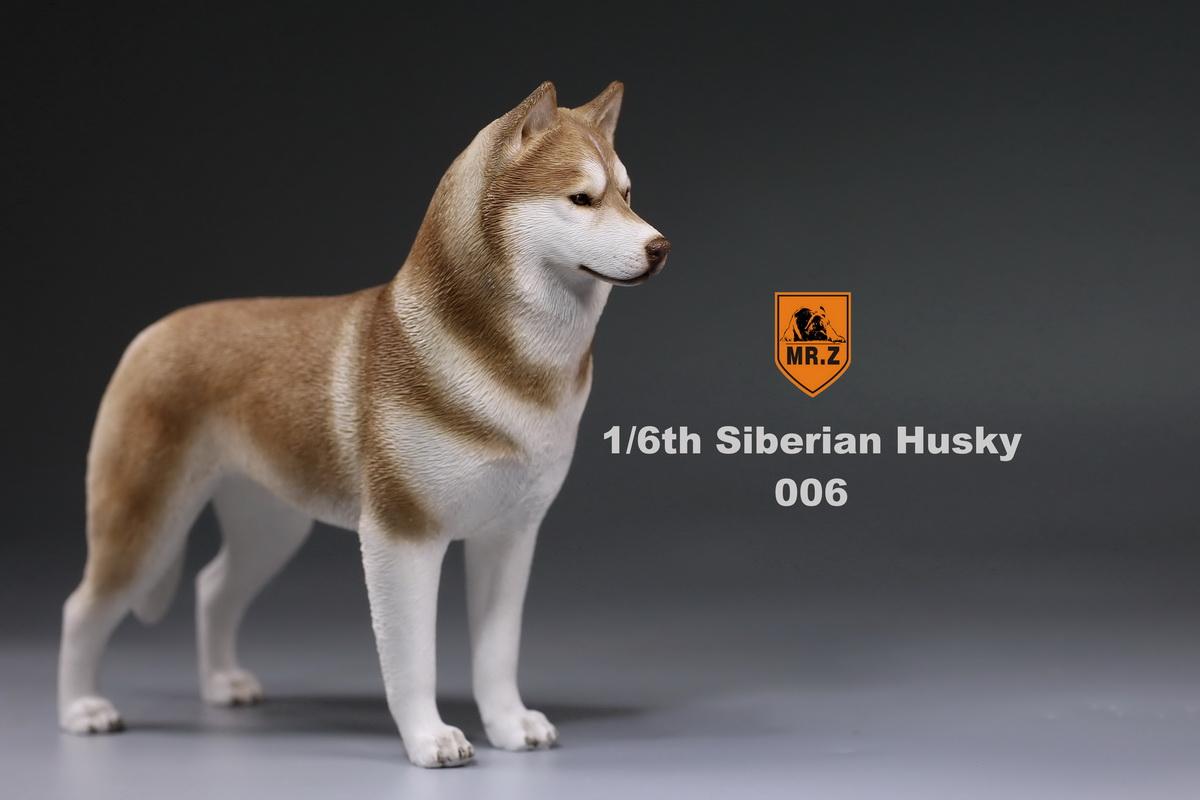 mrz-husky024