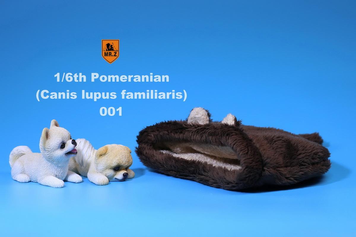 mrZ-pomerian02