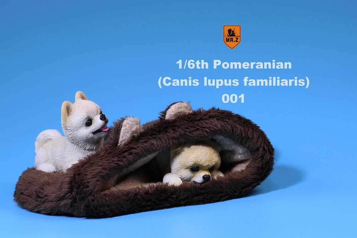 mrZ-pomerian03