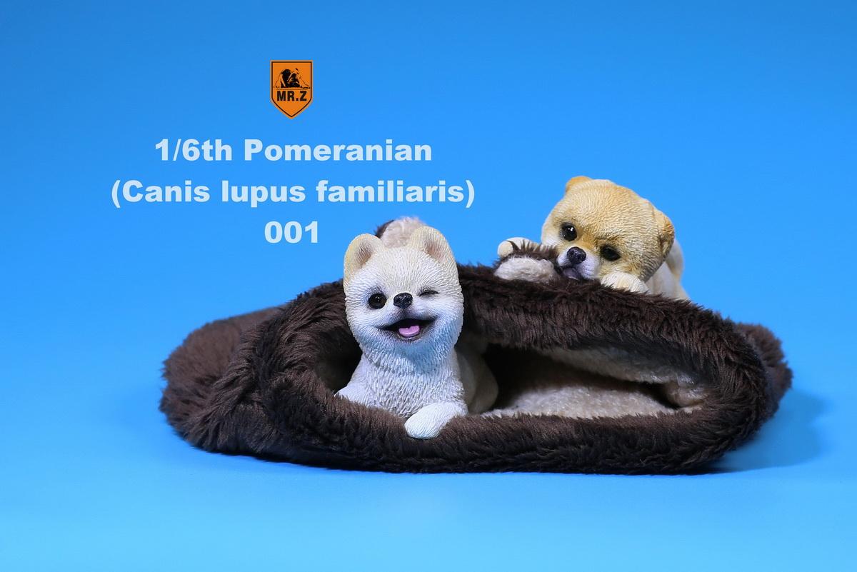 mrZ-pomerian04