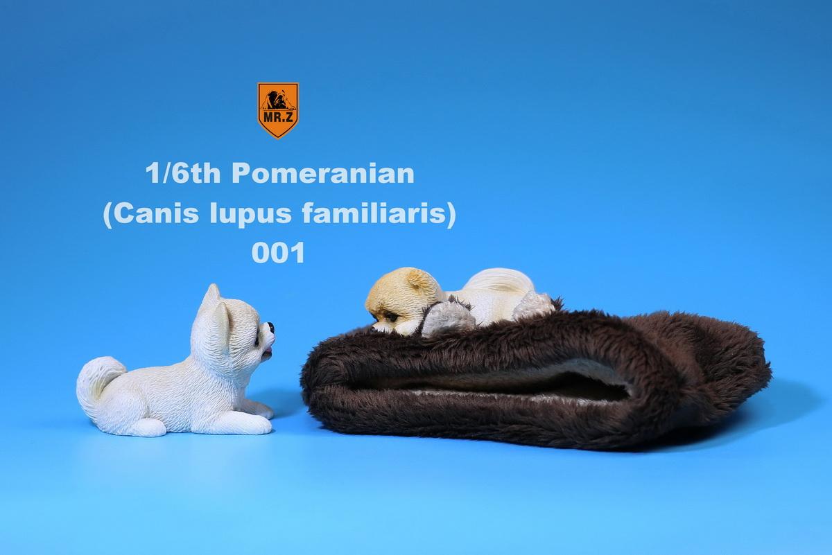 mrZ-pomerian07