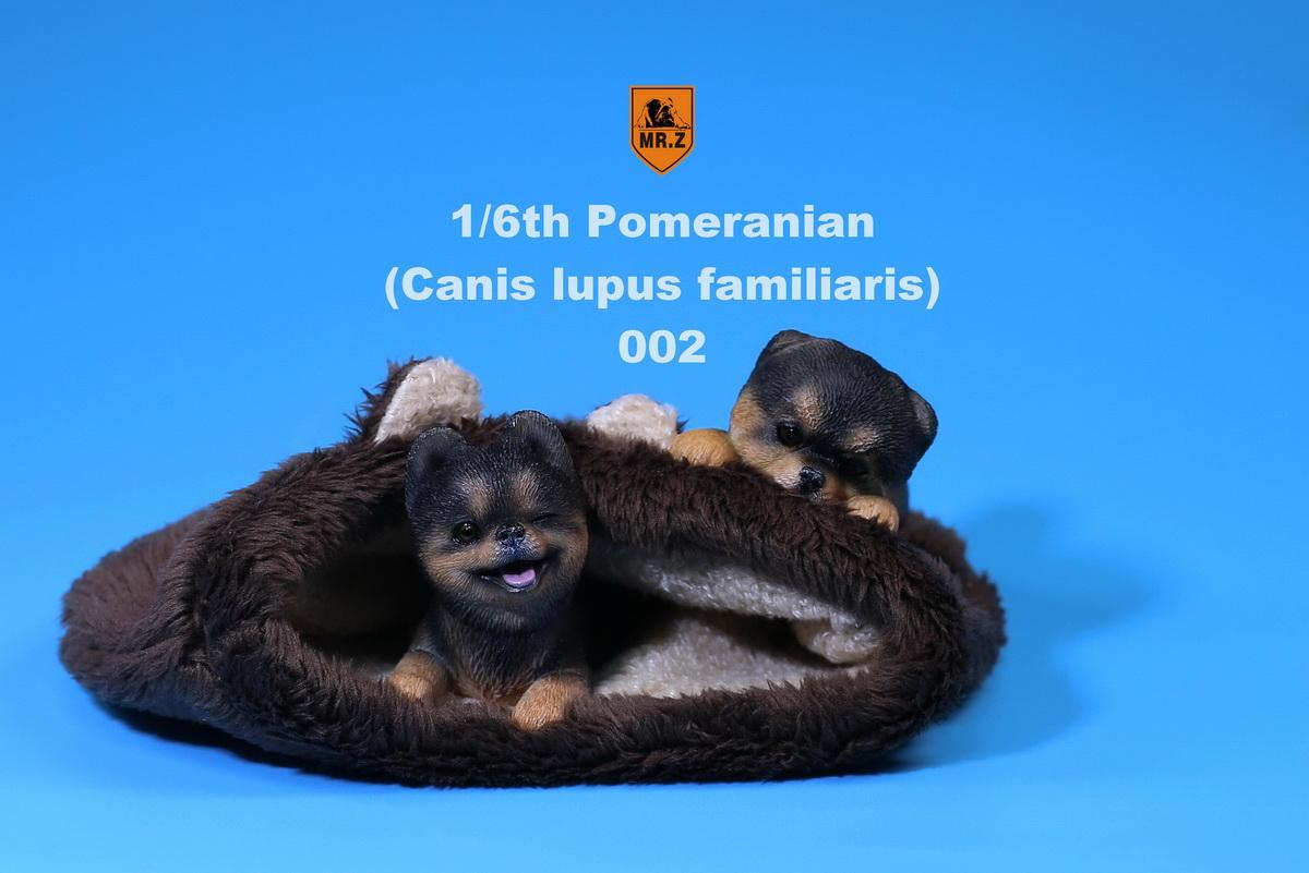 mrZ-pomerian08