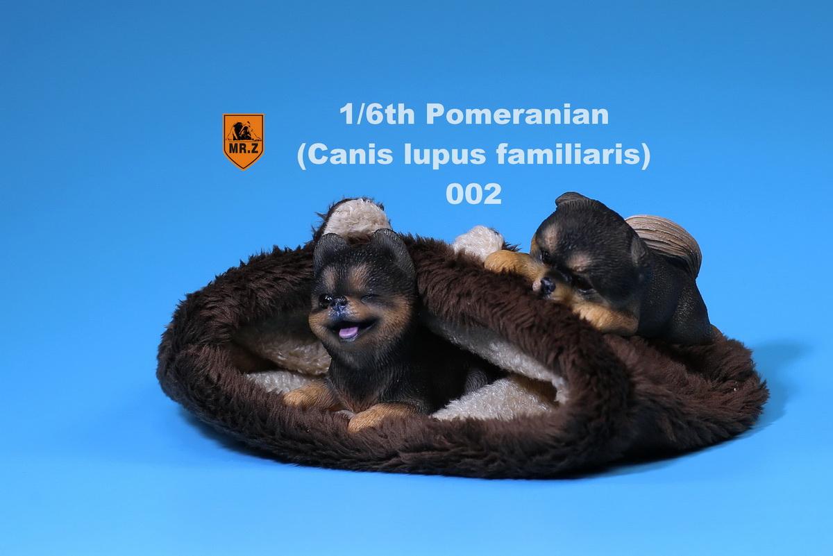 mrZ-pomerian10