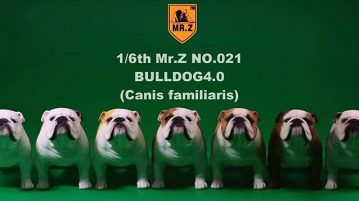 mrZ-brit-bulldog00