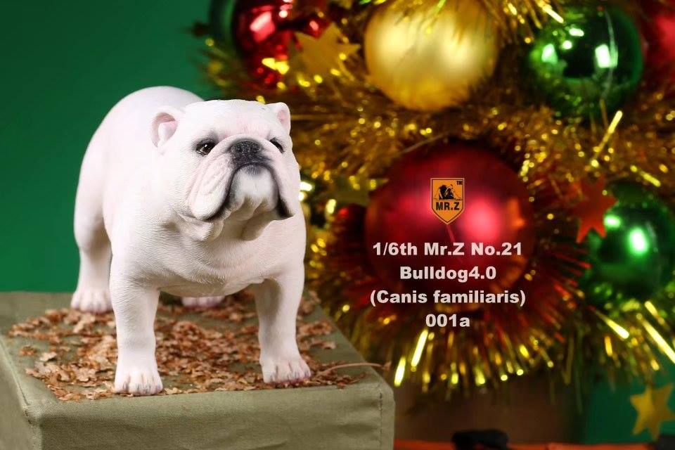mrZ-brit bulldog012