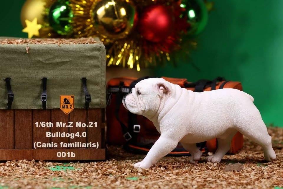 mrZ-brit bulldog013