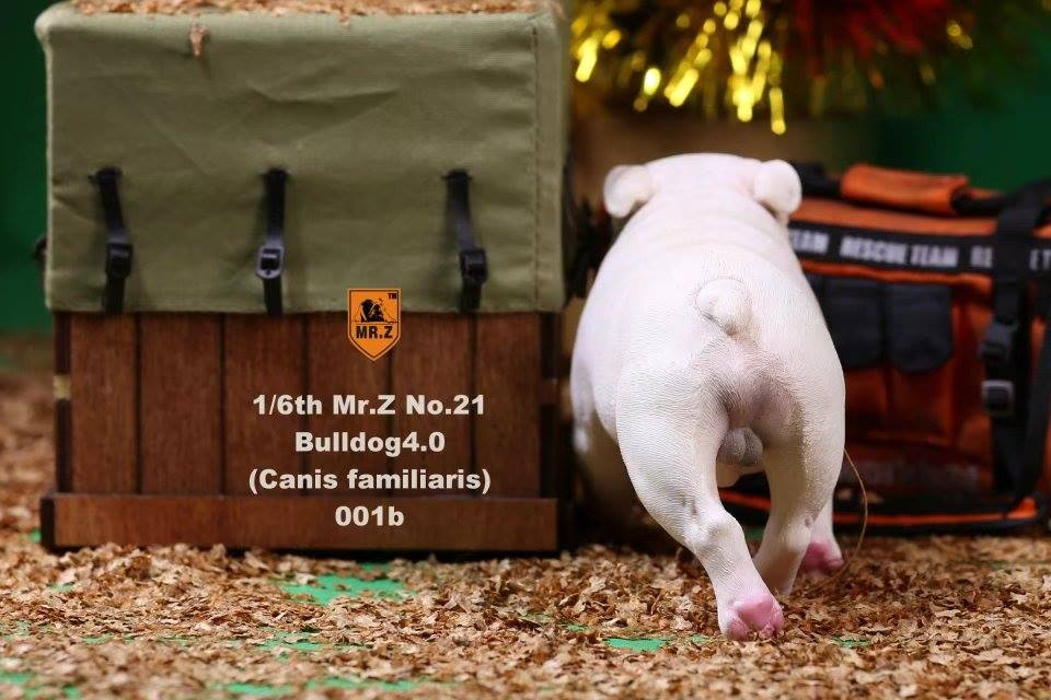 mrZ-brit bulldog014